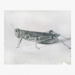 http://marshallroemen.com/files/gimgs/th-1_Grasshopper.jpg